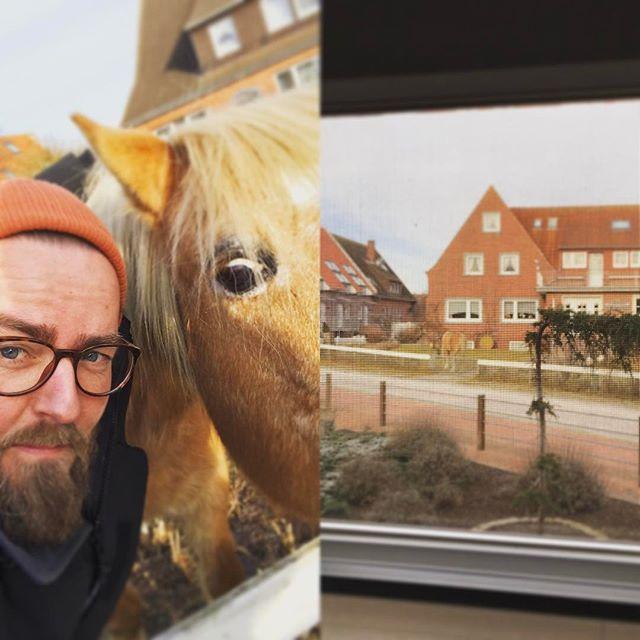 Dieser Moment wenn du bei dem Kunden aus dem Fenster kuckst und der nen Pferd im Vorgarten hat ?. Sachen gibts ? #Baltrum #Pferd #norderney #garten #verrückt #mitperdantseeupnördernee